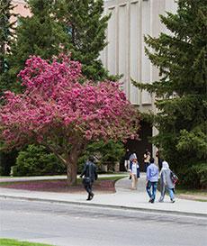 Why University of Calgary